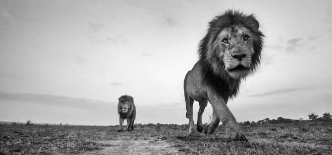 wildlife-photography-2